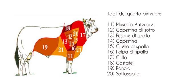 4 - Tagli di carne bovina anteriore