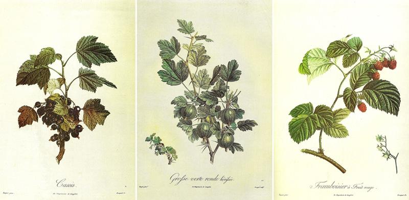 Schede botaniche