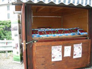 Gran-Tour-dItalia-Emilia-Romagna-ciliegi