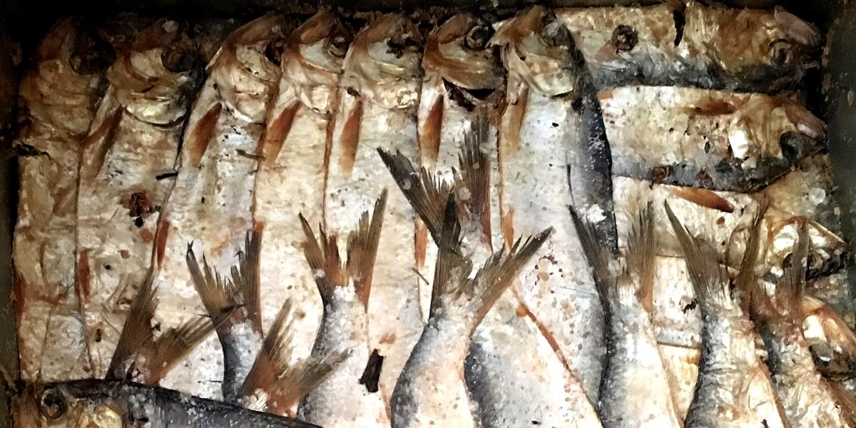 un sacco di servizio di incontri di pesci