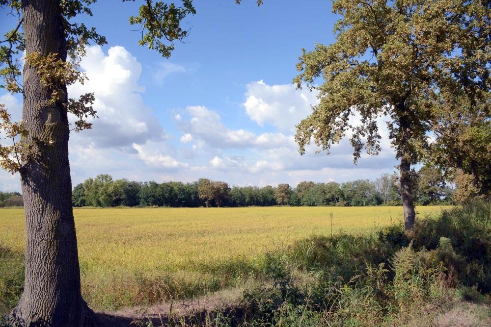 Gran-Tour-dItalia-Lombardia-riso