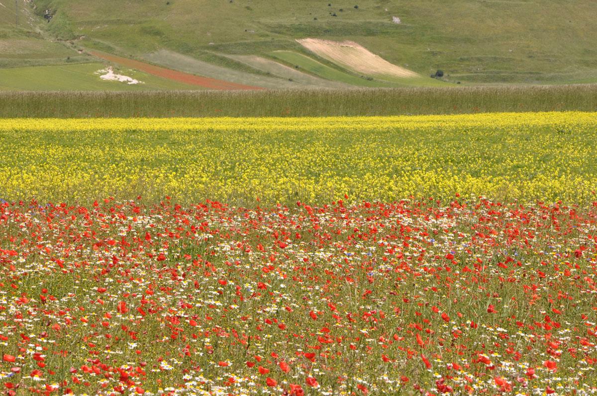 Gran Tour Umbria lenticchie 2 campi