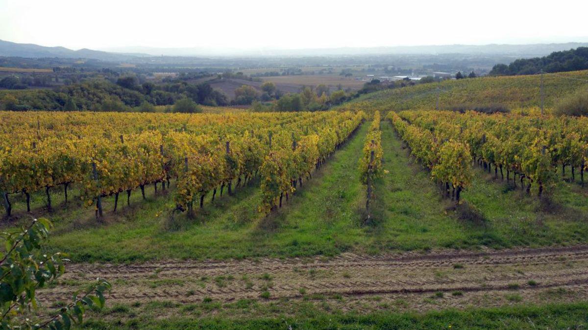 Gran Tour Umbria vini Torgiano
