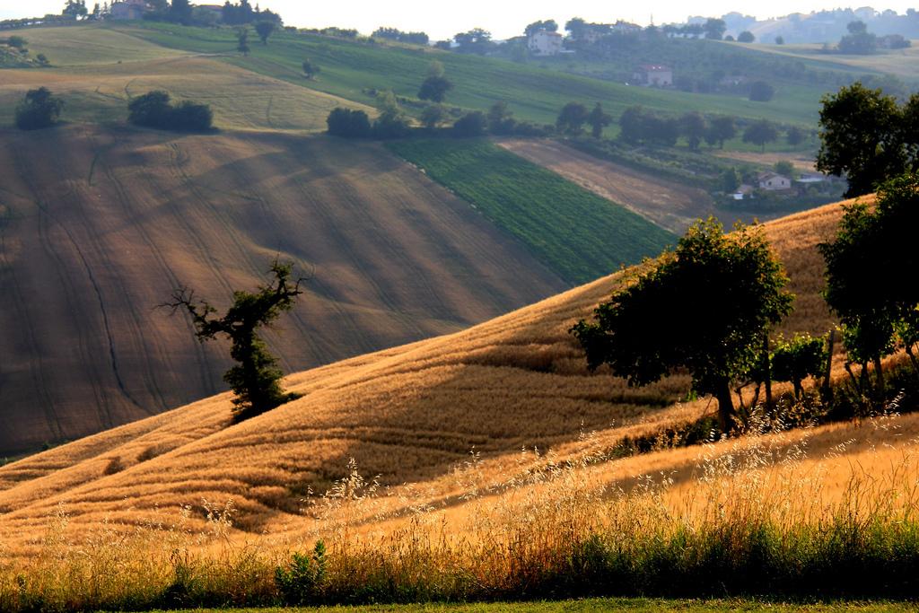 Gran Tour Marche Maccheroncini paesaggio marchigiano