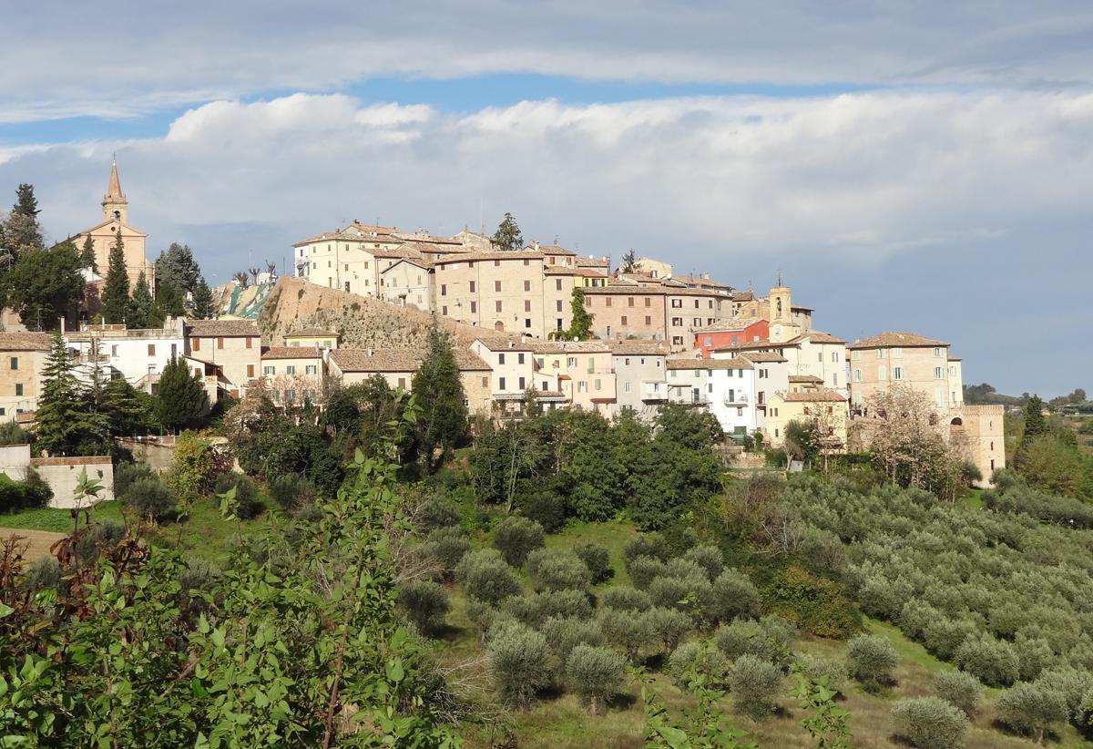 Gran Tour Marche Olio Extravergine Cartoceto