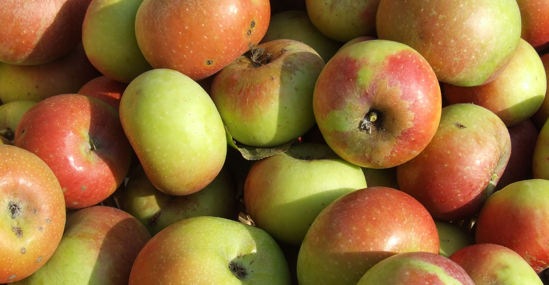 Gran Tour Marche mela rosa 2