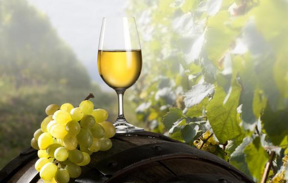 Gran-Tour-dItalia-Marche-vitigni-vini-marchigiani