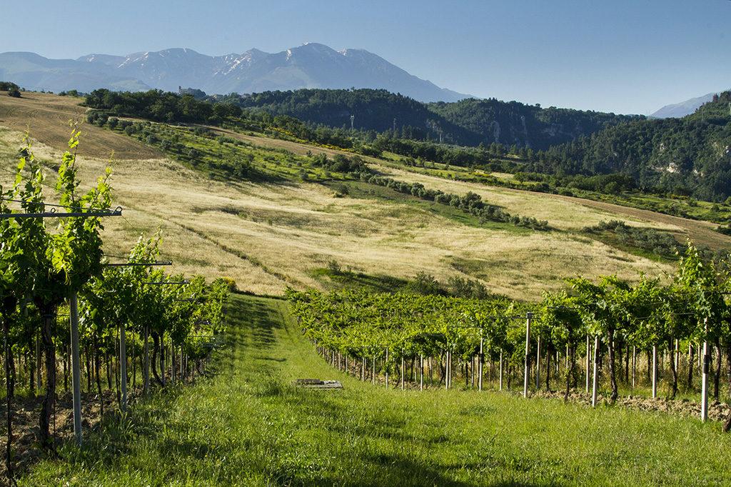 Gran Tour Abruzzo Montepulciano 2