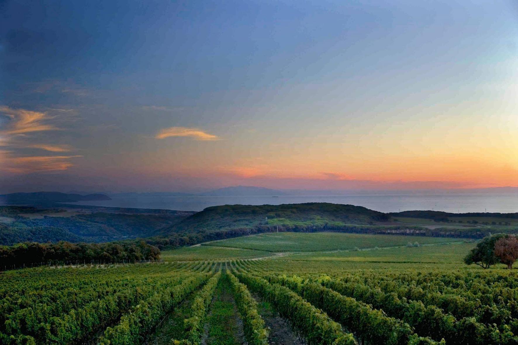 Gran Tour Toscana Bolgheri