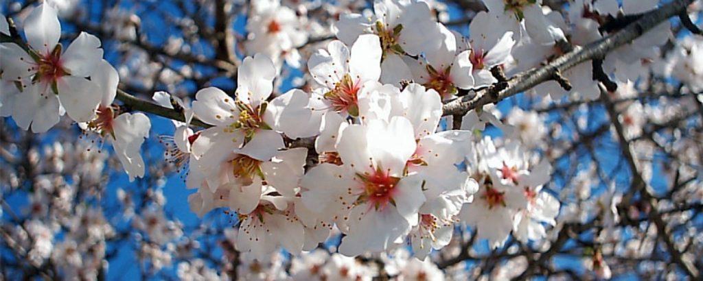 grantour-sicilia-Mandorlo-in-fiore-avola