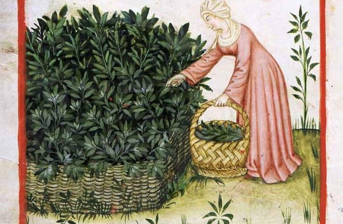 Fin dall'antichità era tradizione raccogliere erbe per i liguri