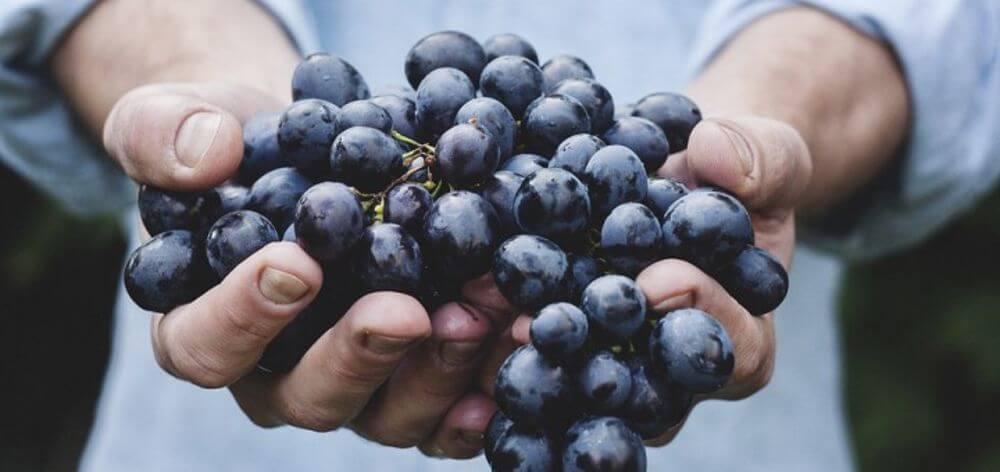 uva che dà origine a vino di grande carattere