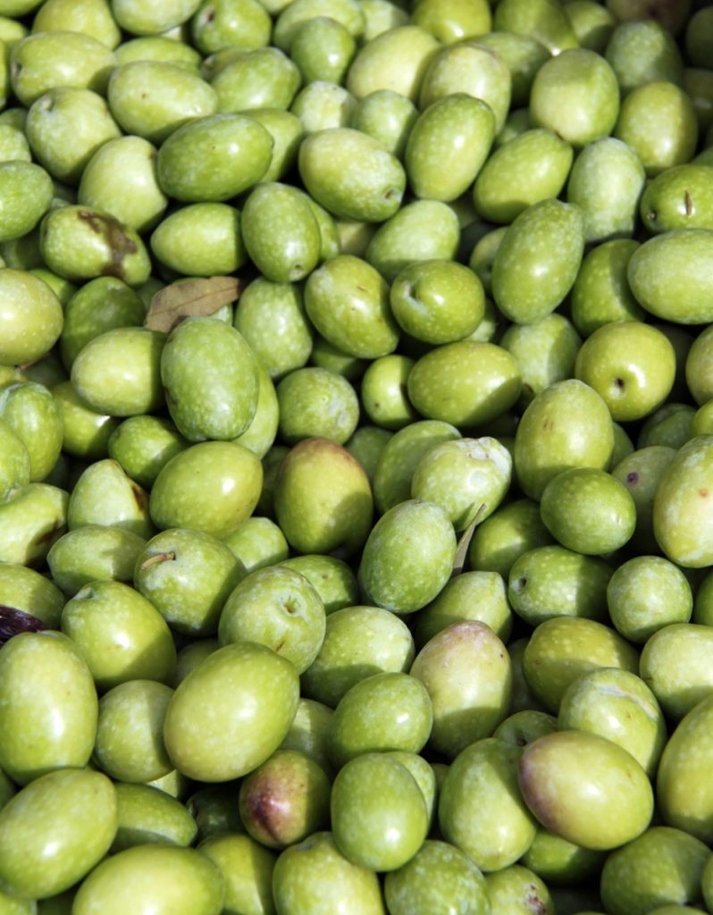 Olive sarde raccolte