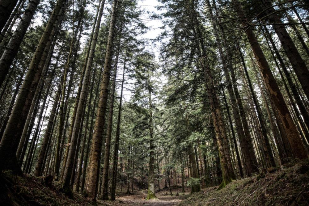 Le foreste casentinesi
